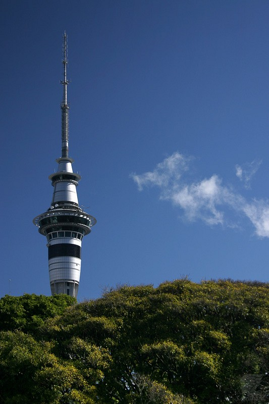 Sky Tower above the Trees