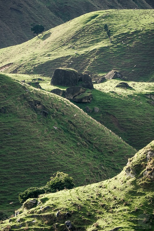 Hills and Sheeps