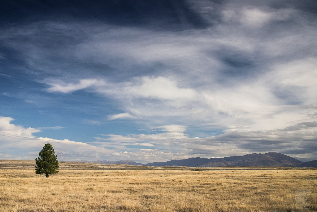 Twizel Plains